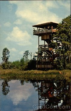 Okefenokee Swamp Georgia... This is where i grew up.My grandpa and daddy helped build this tower.As a kid we had a lot of fun there......  :)