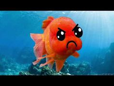 Silly Fishies Funny Video for Babies and Little Kids - Funny Sea Animals and Fish - YouTube Funny Baby Gif, Funny Babies, Funny Kids, Circus Maximus, Social Media Video, Kids Laughing, Pikachu, Fish, Make It Yourself