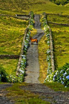 Ilha Terceira - Açores - Portugal - Foto: Luís Godinho