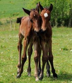 Horse BFFs.