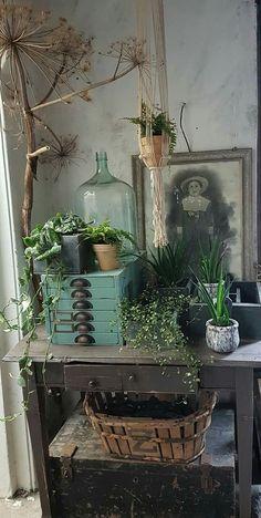 I have a demijohn basket old photo plants trunk dried material. Can I put i - I have a demijohn basket old photo plants trunk dried material. Can I put i -