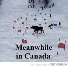 Funny pictures about Just a regular day in Canada. Oh, and cool pics about Just a regular day in Canada. Also, Just a regular day in Canada. Moose Pictures, Funny Pictures, Funny Pics, Funny Stuff, Funny Moose, Meanwhile In Canada, Canadian Things, The Meta Picture, Canadian Winter