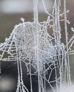 Frosty web by Hazel Terry