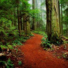 Mystical Trail by Randy Hall