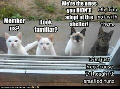 I'm the gray cat! lol