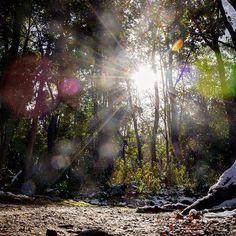 【maaaaage】さんのInstagramをピンしています。 《木漏れ日✨ 久しぶりに家の前の公園?森?を散歩。レンズのせいで変わった写真が撮れたけどこれも神秘的ってことで…。 * Sun rays in the forest☀️Had a short refreshing walk through the woods in front of my house. * Diese  Sonnenstrahlen zwischen den Bäumen hat mir ein geheimnisvolles Eindruck gegeben✨ * #forest #woods #trees #nature #naturelovers #landscape #wanderlust #sun #sunrays #light #shadow #igersjp #team_jp_ #igworldclub #camera #nikon #photography #instadaily #reflection #自然 #風景 #森 #木漏れ日 #光 #ファインダー越しの私の世界…