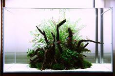 superb scape with extreme hygiene needs :D nature-aquarium:  love it