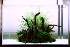 superb scape with extreme hygiene needs :D nature-aquarium:  love it