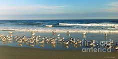 This is the perfect size to fit over a sofa!http://fineartamerica.com/featured/beach-party-shelia-kempf.html