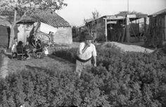 Huerta de Valencia en lo que hoy es la calle de Casilda Castellvi desde la calle Santa Cruz de Tenerife. Foto realizada por José Antonio Salvador Peris. 1945. Archivo de Mark Palandri.