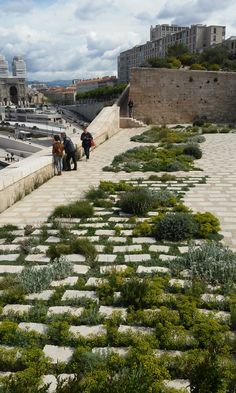 interplanted pavers soften this hardscape, creating semi-full and lush garden areas with paths (Marseille Fort Saint-Jean)