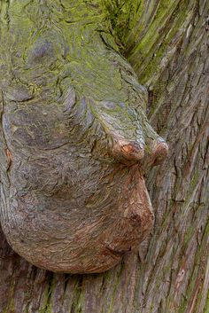 Exorbités | Flickr - Photo Sharing! Weird Trees, Enchanted Tree, Woodland House, In Natura, Tree Faces, Image Nature, Tree Carving, Unique Trees, Old Trees