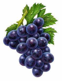purple-grapes.jpg 537 × 700 bildepunkter