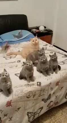 Funny Cats and Kittens Meowing video Cute Baby Cats, Cute Cats And Kittens, Cute Funny Animals, Cute Baby Animals, Kittens Cutest, Funny Cats, Sleepy Animals, Easy Animals, Wild Animals