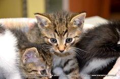 ADOPCJA PILNA ! Te kocięta, szansę na życie dostały w lecznicy ... Rodzina szuka nowych domów !
