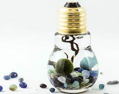 Items similar to Marimo terrarium, lightbulb terrarium, Aqua terrarium, zen garden, living home decor, spring decor, wedding gift on Etsy
