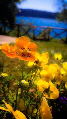 Yellow flowers spring sun