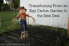 Transitioning from an egg carton garden to the real deal