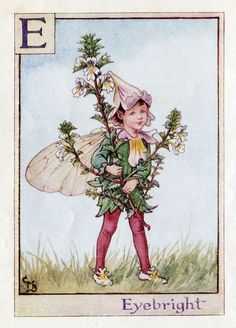 Cicely Mary Barker Coloring Pages   ... Fairy Vintage Print, c.1940 Cicely Mary Barker Book Plate Illustration