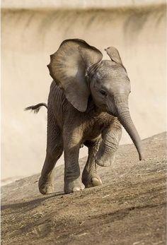 Elephant stampede!