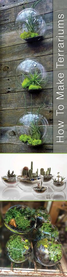 DIY Terrariums.. Easy, simple tutorial!