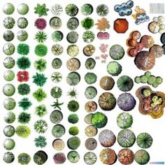 Pinned onto Plants & Trees DrawingsBoard in Sketches Category