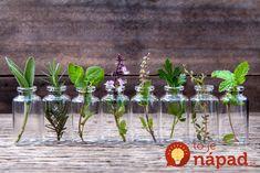 Mnohí z nás by radi vo svojej domácnosti pestovali rastlinky rôznych druhov, avšak nemáme k dispozícii záhradku, kde by sme tak mohli robiť. Alebo si chceme dopriať radosť z pestovania aj počas zimného obdobia v