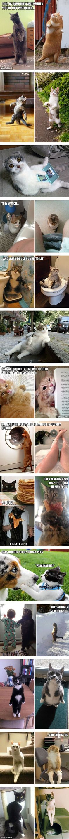 25 Pics Prove That Cats Are Slowly Evolving Into Humans