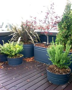 I'm thinking of using these as summer time turtle habitat. I love the idea of using watering troughs, especially if I paint them black.