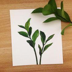 #일러스트 #일러스트레이션 #드로잉 #수채화 #수채화일러스트 #녹색 #자연 #식물 #잎사귀 #식물일러그트 #그림 #자연일러스트 #손그림 #녹색 #일상 #힐링 #illust #illustraion #art #draw #drawing #leaves #nature #plants #watercolor #green