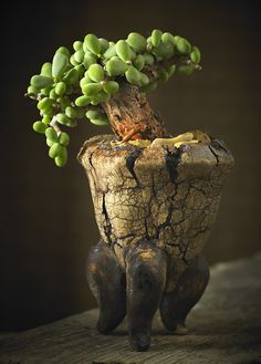 Succulents and pottery by Chilli: More pots and a few experiments. Succulent Display, Succulent Bonsai, Succulent Gardening, Bonsai Garden, Succulents In Containers, Cacti And Succulents, Planting Succulents, Cactus Plants, Ceramic Pinch Pots