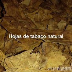 Hojas natural de tabaco Virginia ♫ Justin Bieber - Sorry (feat. J Balvin) Hecho con Flipagram - https://flipagram.com/f/gZ3oNNQ6kH