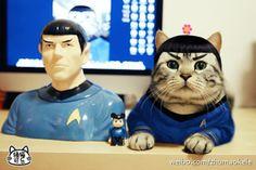 Ke Le - el gato meme chino