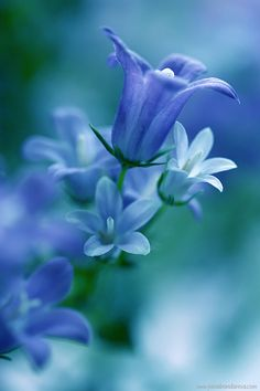 Blue bell-shaped flower