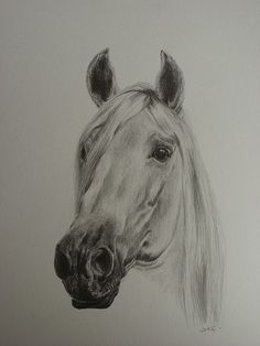 'MAJESTIC' - AN ORIGINAL DRAWING IN GRAPHITE OF A WHITE HORSES HEAD