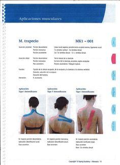 rjirsrices nm?  marti-rs     M.  trapecio MKI - O01     inserción proximal:  Porcíón descendente:  Línea nucal superior,  ...