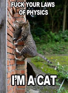 View All - Funny Animal Pictures With Captions - Very Funny Cats - Cute Kitty Cat - Wild Animals - Dogs on imgfave