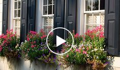 Love the shutters and windowboxes    www.wilddunes.com