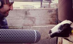 FREE & PREMIUM LIBRARY | ANIMAL FARM | SOUNDEXMACHINA