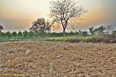 Field by Wongphakdee