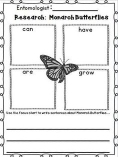 Worksheet Monarch Butterfly Worksheets life cycles 2nd grades and butterflies on pinterest