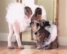 Bulldog and tutus.