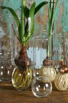 Bulb Vases. Wedding centerpieces? #wedding #centerpiece #decoration #floral