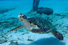 Sea Turtle Art Underwater Photography Print 4x6 Modern Nautical Home ...