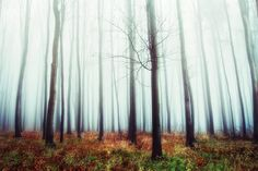 Autumn end by Péter Bognár on 500px