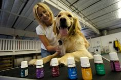 Calming Essential Oils, Essential Oils For Anxiety, Dog Training School, Dog Training Classes, How To Ease Anxiety, Puppy Obedience Training, Dog School, Oils For Dogs, Anxiety Remedies