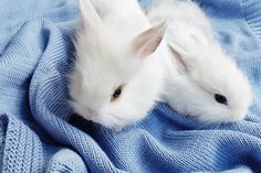 #amazing  #cotton #bedcover and cute little white bunnies