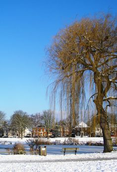 2009 Frozen pond Ham Common, Ham Snowy Winter Photo by Anita Russell Richmond Surrey, Richmond Upon Thames, Beautiful Streets, Beautiful Places, Winter Photos, Old Photos, The Hamptons, United Kingdom