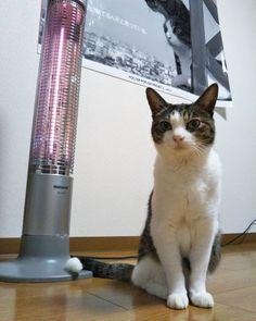 とにかくストーブ前は独占 #猫 #ストーブ #cat #cats #lovecats #instacat