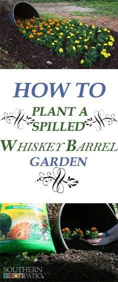 Southern Patio Whiskey Barrel, some shade and a ton of gorgeous flowers can create a whimsical looking spilled garden. Whiskey Barrel Flowers, Whiskey Barrel Planter, Whiskey Barrels, Rustic Gardens, Outdoor Gardens, Growing Flowers, Planting Flowers, Flower Gardening, Lawn And Garden